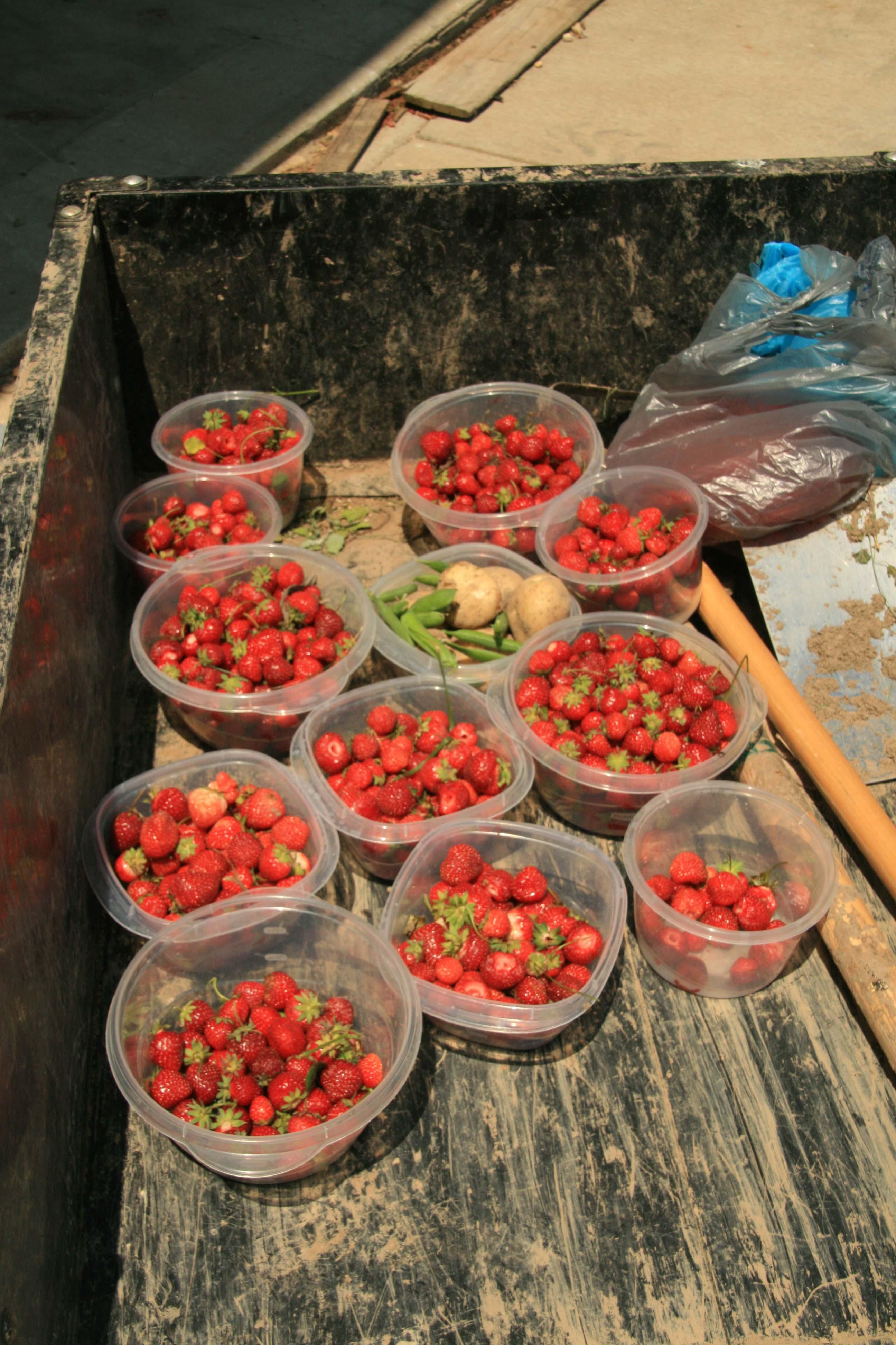 14lbs strawberry